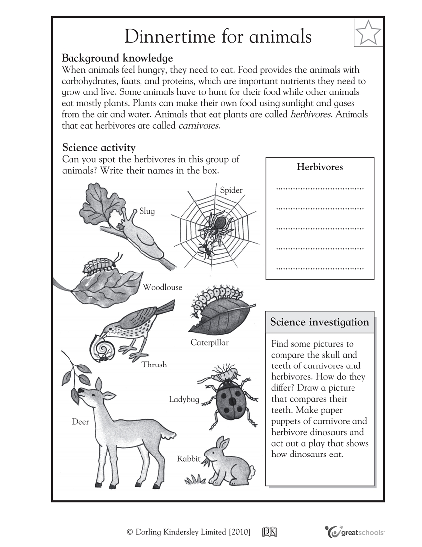 worksheet Herbivore Carnivore Omnivore Worksheet important carnivore herbivore omnivore animals worksheet goodsnyc com coolschool101 grade 4 science